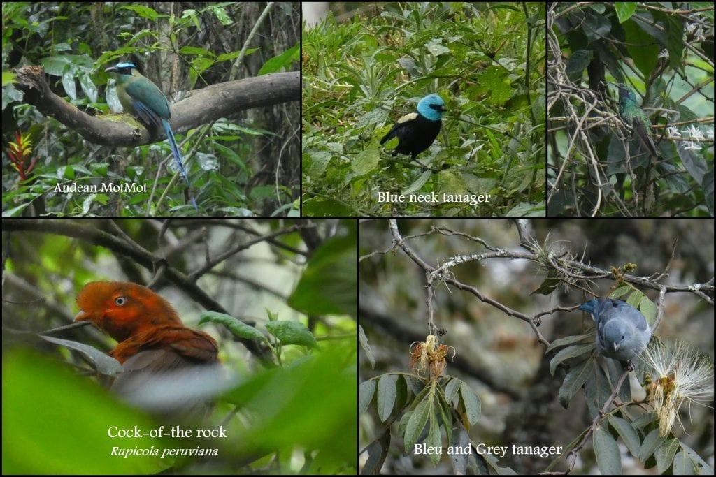Flora and Fauna of Machu Picchu