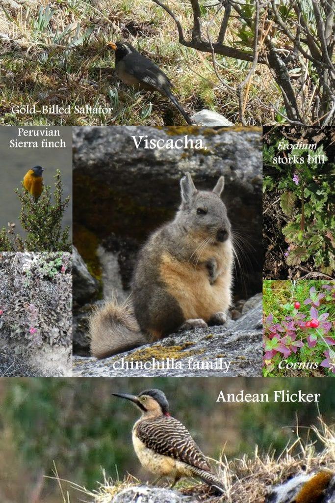Flora and fauna on Machu Picchu