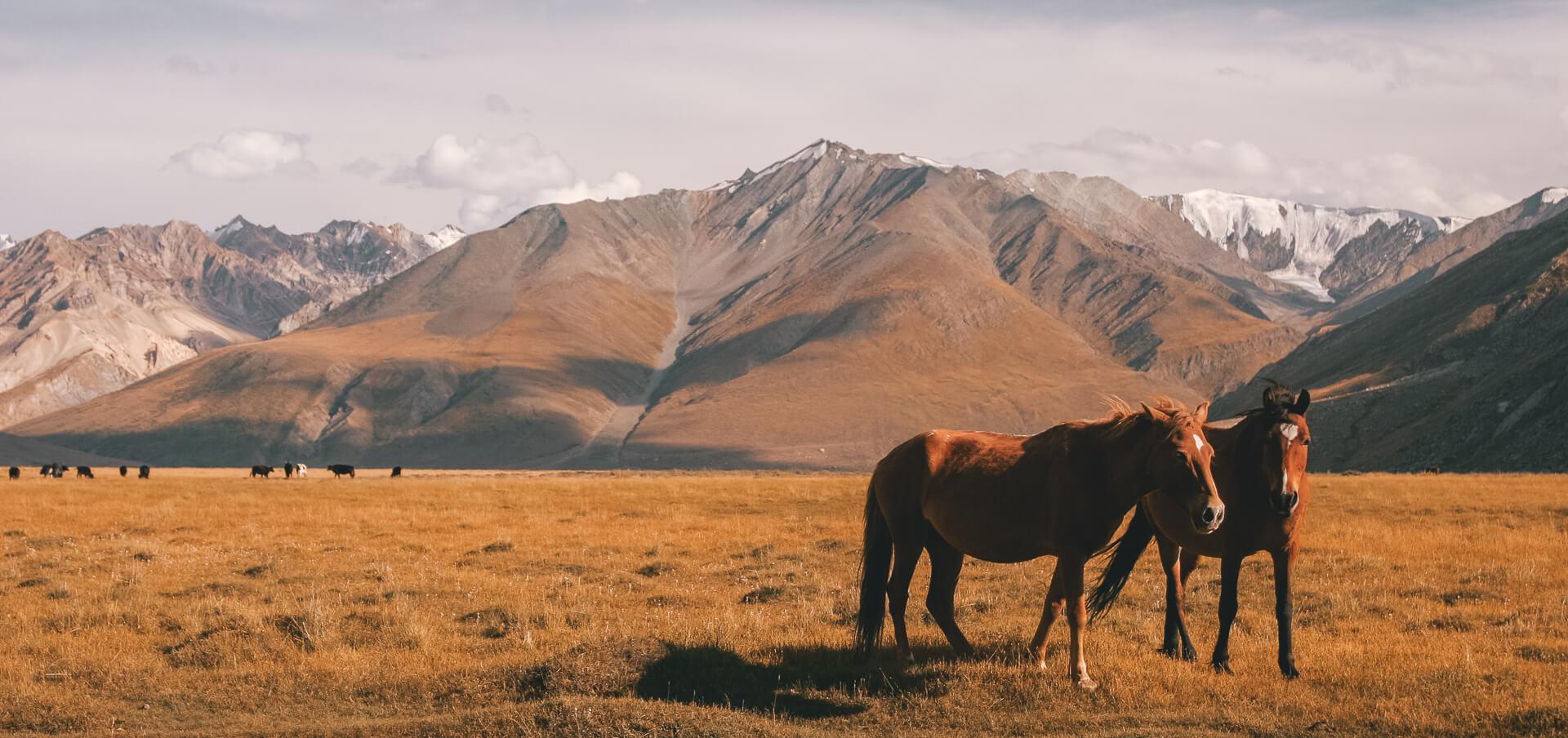Ladakh Tri Adventure Earths Edge