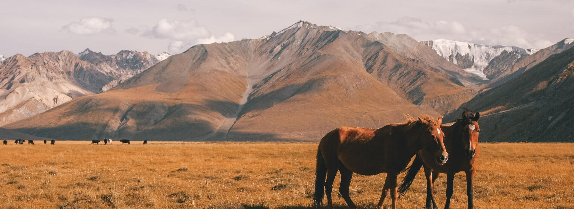 Ladakh Tri Adventure Earth's Edge